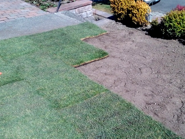 Tacoma Landscaping new sod installation